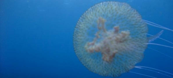 Beautiful blobs that blight some Malta beaches - but only sometimes