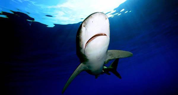 Photo: Daniel Botelho, courtesy of Shark-Lab Malta