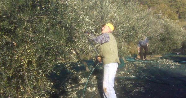 Ivano picking at La Poiana
